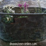 Old copper wash tub with flowers planted